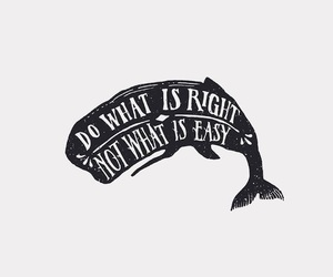 quotes, whale, and life image