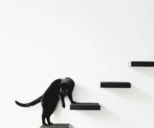 cat, black, and minimalism image