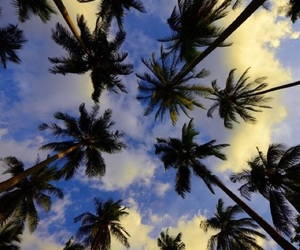beach, palm, and friends image
