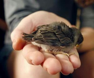 sparrow and sweet image