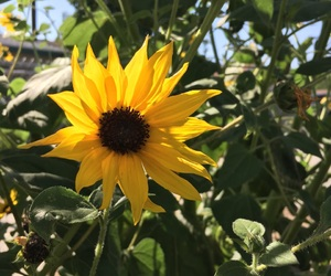 flower, sun, and sunflower image