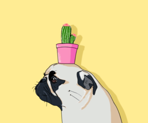 cactus, dog, and pug image