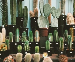 cactus, decor, and plants image