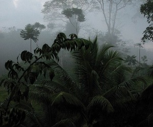 foggy and green image