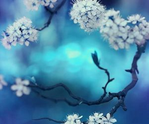 flowers, blossoms, and spring image
