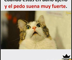 frases, memes, and fraces image