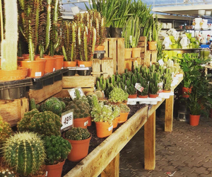 cactus, greenhouse, and plants image