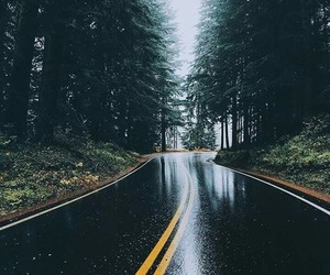 nature, forest, and rain image