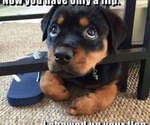 flip flops and puppyface image