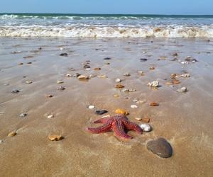 pebbles, salt, and sand image