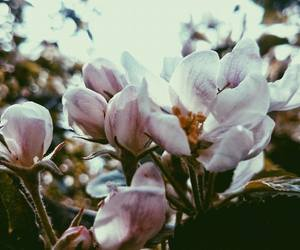 beauty, flower, and spring image