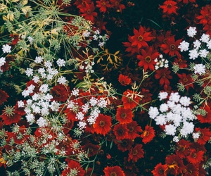 colorful, pretty, and floral image