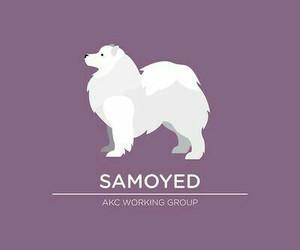 dog, Samoyed, and wallpaper image