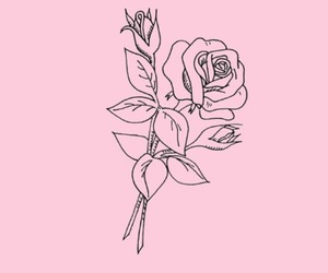 rose, outline, and pink image