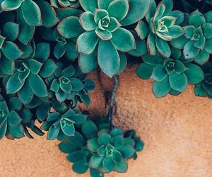 plants, wallpaper, and green image