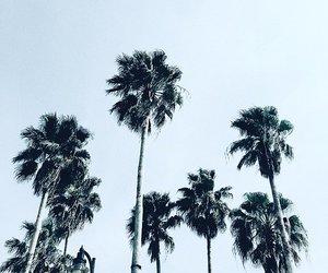 california, summer, and la image