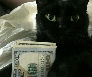 cat, money, and black image