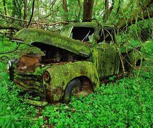 green, car, and nature image
