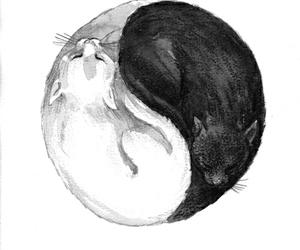 animal, wallpaper, and yin and yang image