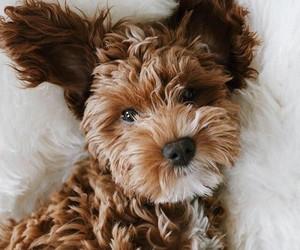 animals, cute animals, and cuteness image