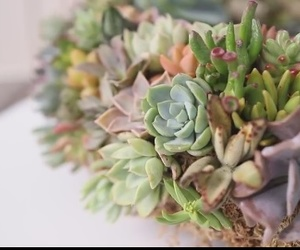 succulents and wreath image