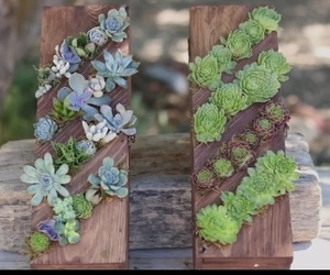 boxes, wine, and succulents image
