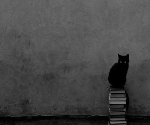 cat, book, and black and white image