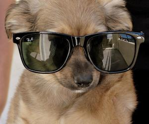 cool, dog, and style image