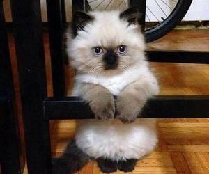 kitten and kitty image