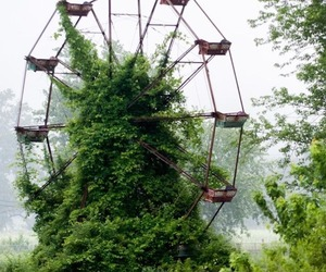 nature, green, and ferris wheel image