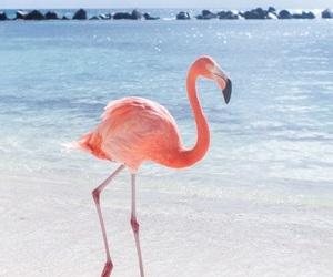 flamingo, beach, and summer image