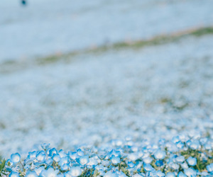 blue, flowers, and japan image