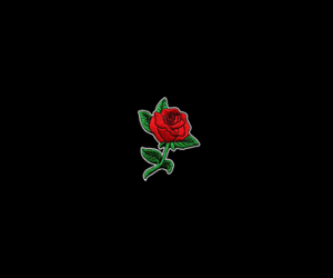 black, trill, and red rose image