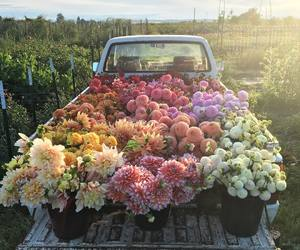 beautiful, love, and bouquet image