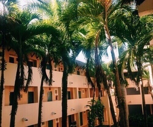 aesthetic, indie, and palm trees image