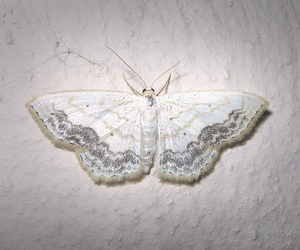 butterfly, white, and beautiful image