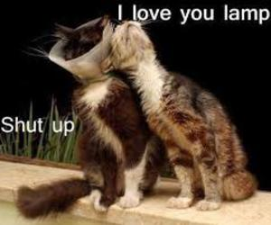cat, funny, and lamp image