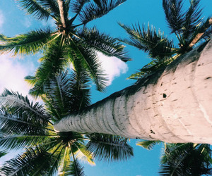 summer, paradise, and tropical image