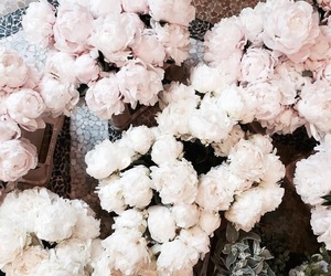 flowers, white, and pink image