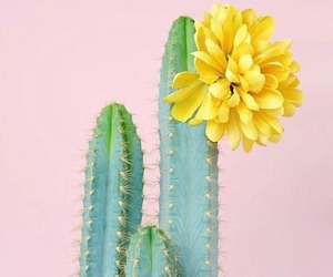 cactus, flower, and pink image