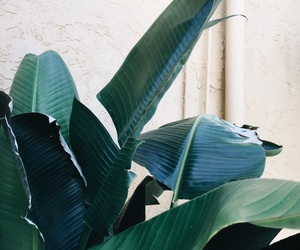 aesthetic, green, and leaves image