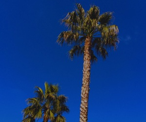 beautiful, blue, and palmtrees image