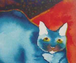 blue, cat, and colors image
