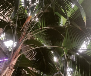 palm, palms, and tropic image