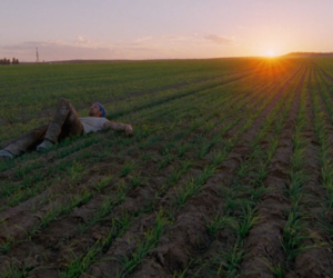 movie, sunset, and terrence malick image