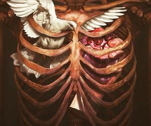 art, heart, and bird image