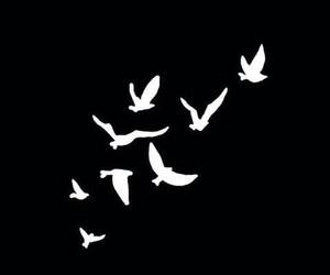 bird, overlay, and editing image