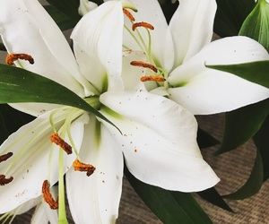 flowers, цветы, and лилии image