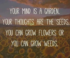quote, mind, and positive image