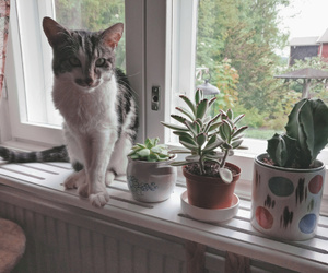 cactus, cat, and green image